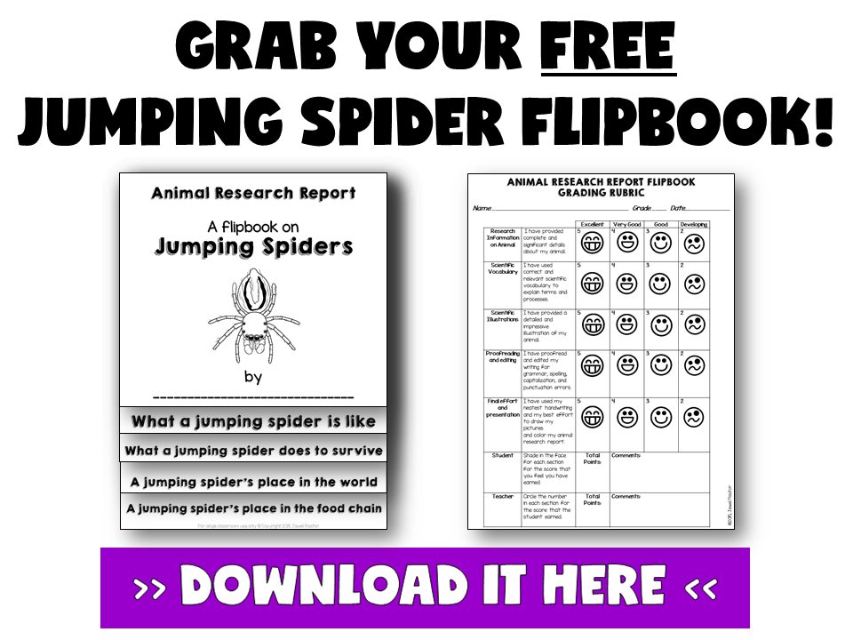THREE GREAT USES OF FLIPBOOKS BY JEWEL PASTOR OF JEWELSCHOOLGEMS.COM | Flip books have tons of uses. Seriously, there are just so many things you can do with them! Here are three great uses of flip books (flipbooks) plus a freebie.